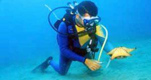 faune-nautica-plongeur