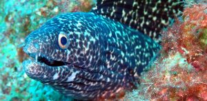 plongee-faune-guadeloupe2